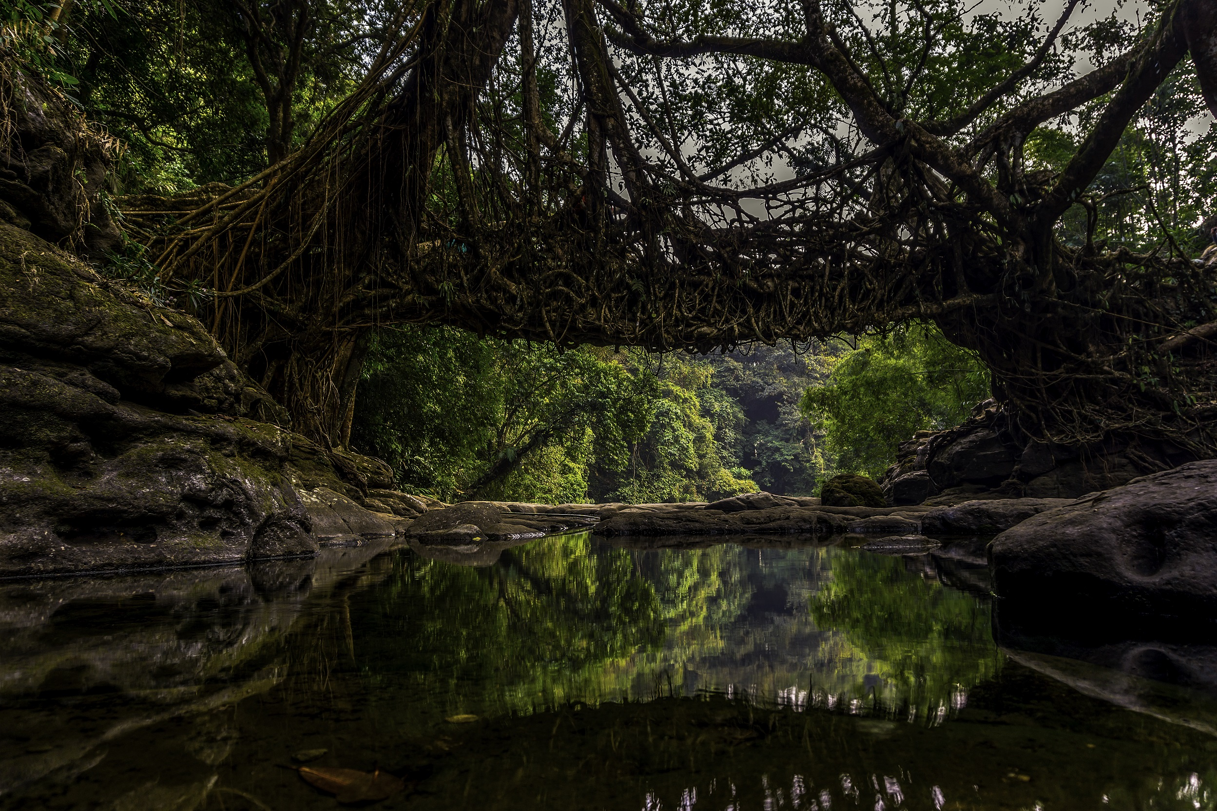 The Megahlayan Age Fest Living Root Bridge Riwai near Mawlynnong